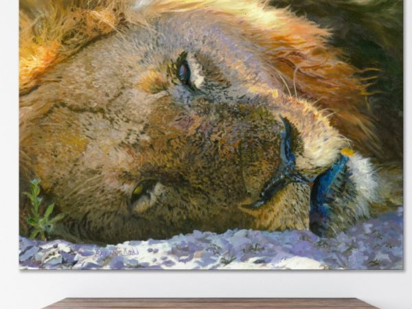 Lion sleeping in the sand