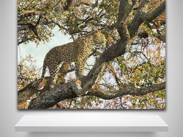Leopard Charlotte's web detail